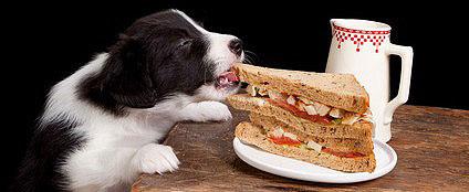 Unarten des Welpen mit konsequenter Hundeerziehung unterbinden