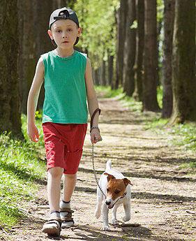 Hier wird die Leinenführigkeit auf einem Waldspaziergang trainiert
