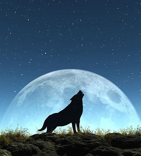 Alle heutigen bekannten Hunderassen stammen vom Wolf ab.