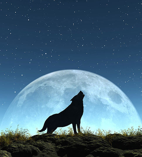 Alle heutigen Hunde stammen nach molekulargenetischen Untersuchungen vom Wolf ab.