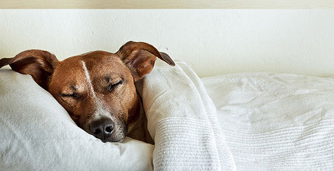 hundekrankheiten von a z symptome hunde. Black Bedroom Furniture Sets. Home Design Ideas