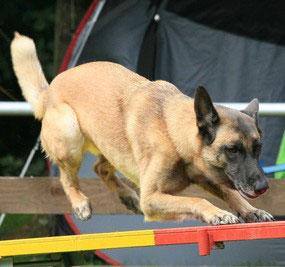 Agility verlangt dem Hund großes Geschick ab.