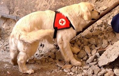Einsatz eines Rettungshundes bei Verschütteten