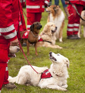 Rettungshunde des DRK gemeisam mit Hundeführer