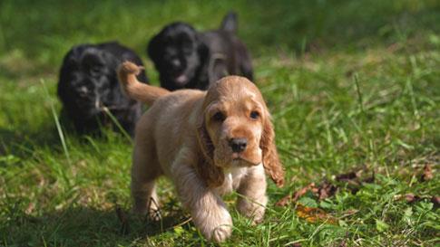 Gerade für den Hundeanfänger ist der Besuch einer Welpenschule eine wertvolle Bereicherung