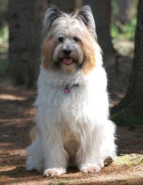 Elos sind perfekte Familienhunde.