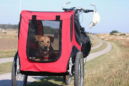 Fahrradanhänger für den Hund sollten leicht und stabil sein, sowie eine robuste Verbindung zum Fahrrad haben.