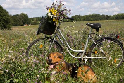 Nur kleine Hunde sollten in einem Fahrradkorb transportiert werden.