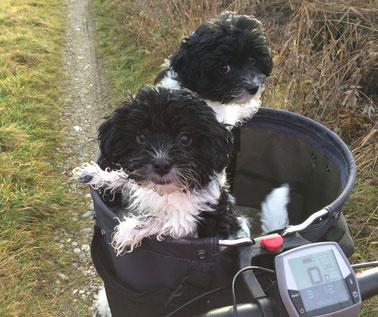 Ein Fahrradkorb für den Hund sollte sicher am Fahrrad befestigt werden können.