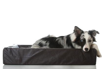 Hundebetten gibt es in vielen unterschiedlichen Designs - auch Luxusausführungen gehören zum Sortiment.