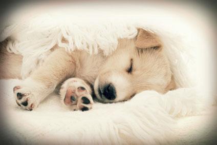 In einer gemütlichen Hundedecke lässt es sich schön kuscheln.