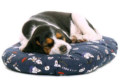Auf dem Hundekissen lässt es sich wunderbar träumen....