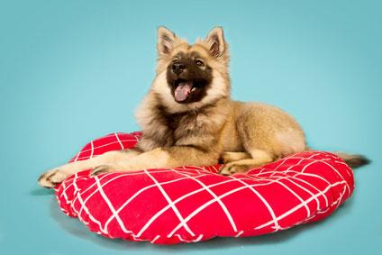 Im Fachhandel gibt es eine große Auswahl an Hundekissen.