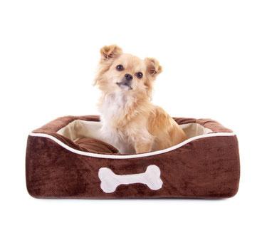 Hundekoerbe gibt es in verschiedensten Varianten und Ausführungen.