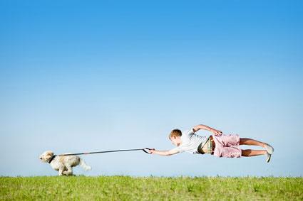 Die Hundeleine ist das wichtigste Accessoir für jeden Hundehalter.