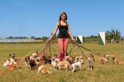 Hundeleinen - Es gibt Führleinen, Schleppleinen und Rollleinen.