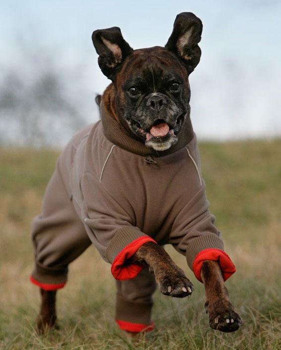 Hundebekleidung kann sinnvoll, aber auch ein überflüssiger Modegag sein.