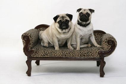 Ein bequemes Hundesofa für die zwei Lieblinge.