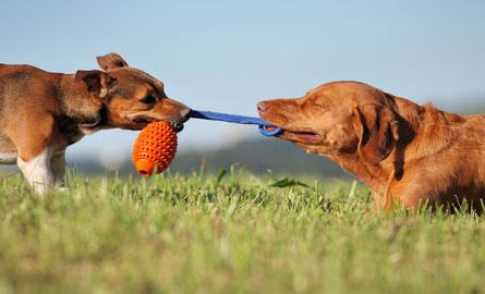 Inzwischen gibt es ein reichhaltiges Angebot bei Hundespielzeug.