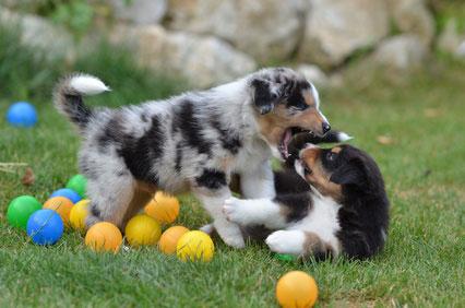 Hundespielzeug für Welpen.