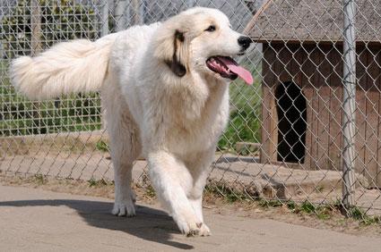Alle Hunde, die in einem Hundezwinger gehalten werden, sollten beizeiten auch Auslauf bekommen.