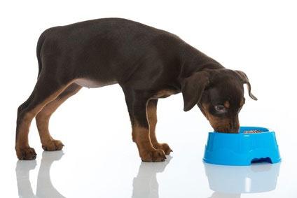 Ein Fressnapf für den Hund gehört mit zu den ersten Anschaffungen.