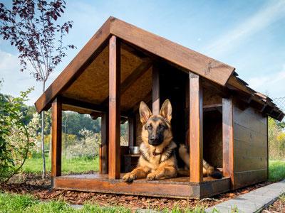 Wer einen Hundehütte Bauplan sucht, findet zahlreiche Baupläne auch zum kostenlosen Download im Internet.