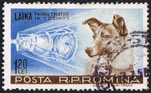Zu einiger Berühmtheit kam auch der Hund Laika, der von den Russen im Sputnik ins All geschossen wurde.