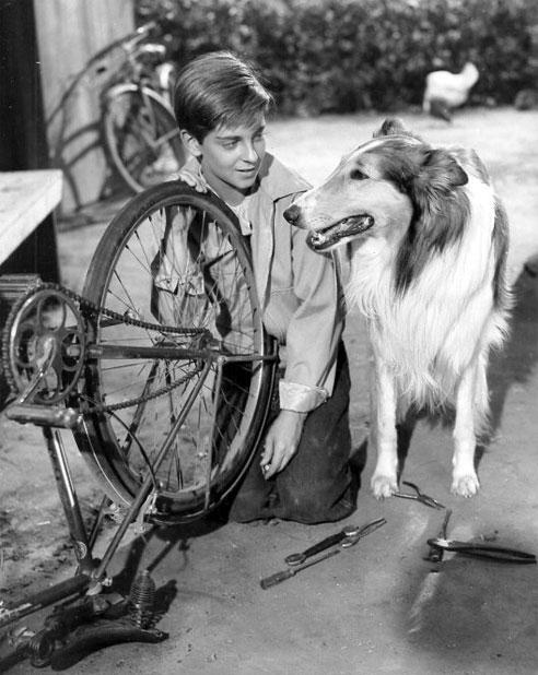 Der Fernsehhund Lassie gehört zu den berühmtesten Hunden.