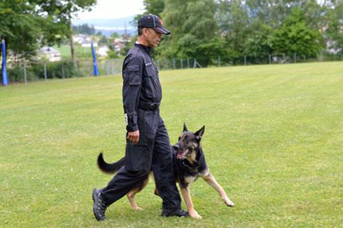 Manche Hunderassen sind für dei Ausbildung zum Polizeihund besonders geeignet.