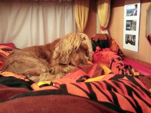 Hunde sollten auf der Reise im Wohnmobil in einer Transportbox oder mit speziellen Gurten gesichert sein.