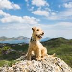 Wenn man das Wandern mit dem Hund gut plant, kann es zu einem unvergesslichen Erlebnis werden.