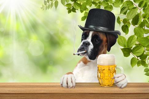 Hunde sollten von Tabakprodukten wie Zigaretten ferngehalten werden.
