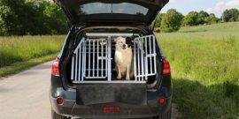 hund-im-auto-transportieren