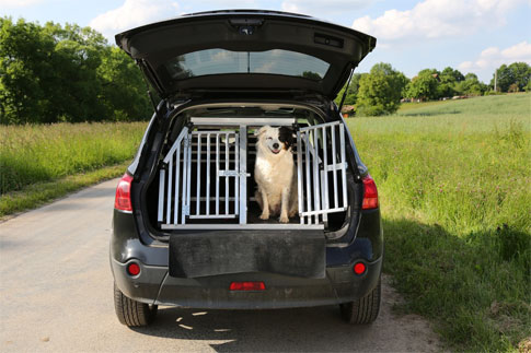 hunde sicher im auto transportieren hunde. Black Bedroom Furniture Sets. Home Design Ideas