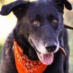 Ein alter Hund braucht oftmals besondere Zuwendung und Pflege.