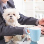 Hund im Buero - was ist bei der Vereinabrkeit von Hund und Beruf zu beachten?