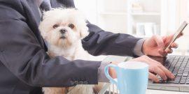 Hund im Buero – nicht immer ist der Vierbeiner an der Arbeitsstelle erwünscht.