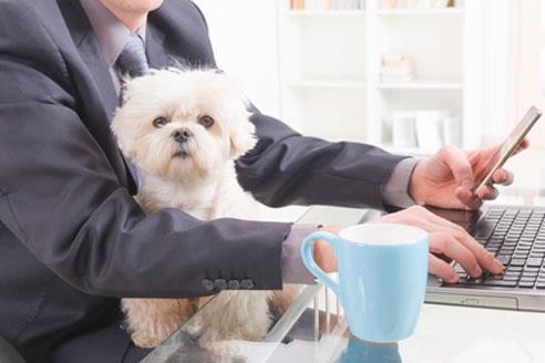 Hund im Buero - was ist bei der Vereinbarkeit von Hund und Beruf zu beachten?