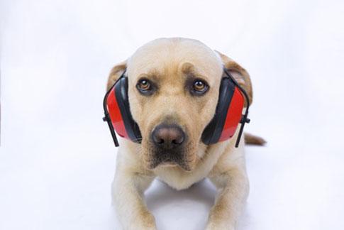 Wer Silvester mit seinem Hund verbringt, sollte frühzeitig durch Zuspruch und Anwesenheit beruhigend auf den Hund einwirken.