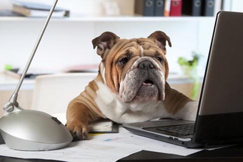 Berufstätig sein mit Hund erfordert ein hohes Maß an Flexibiliät.