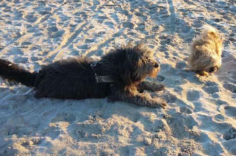 Die Ostsee eignet sich sehr gut als Reiseziel für den Urlaub mit Hund.