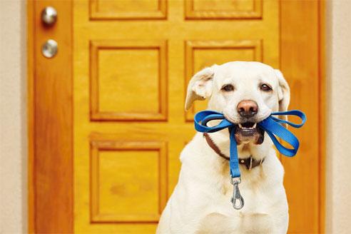 Hunde aus dem Tierheim brauchen viel Liebe.