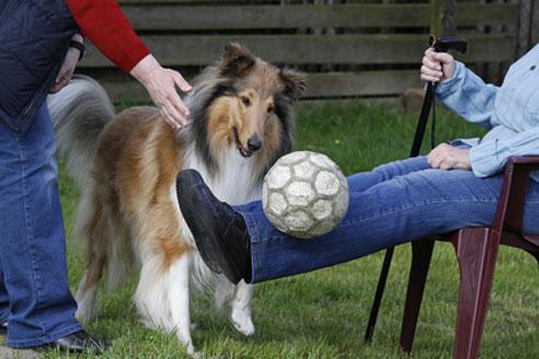 Ein Therapiehund kann alten, kranken und behinderten Menschen helfen.