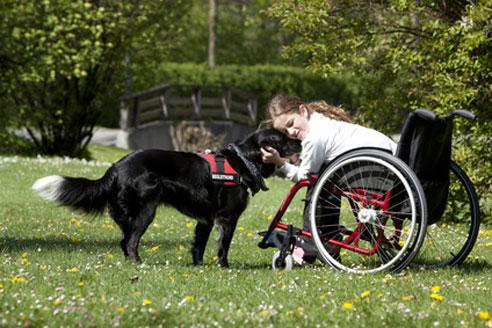 Ein Therapiehund kann Menschen mit körperlichen und psychischen Problemen helfen.