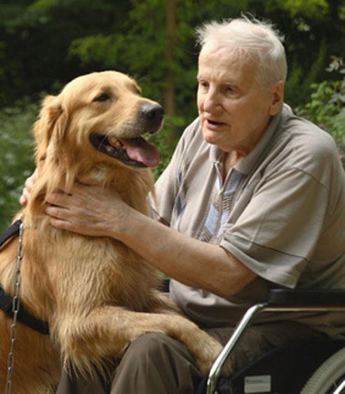 Der Golden Retriever eignet sich besonders gut als Therapiehund.