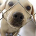 Hunde aus dem Tierheim können eine gute Alternative sein.