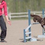 Mit Spaß bei der Sache: Agility-Training fordert Hund und Mensch gemeinsam.