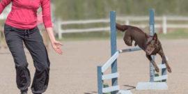 Hund und Mensch beim Agility-Training.