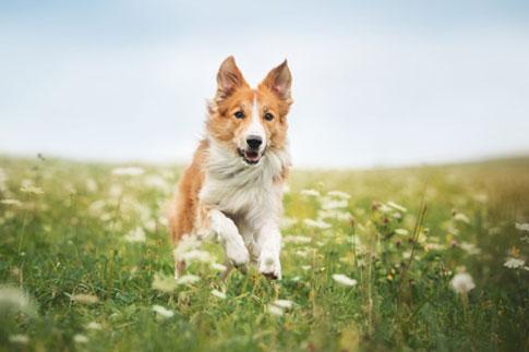 Heuschnupfen Allergien treten beim beim Hund ebenso auf wie beim Menschen.